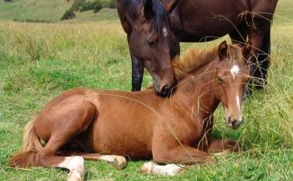 A lovak tényleg álva alszanak?